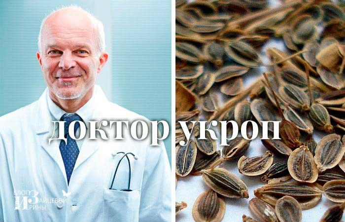 Укропа семена: лечебные свойства и противопоказания, применение в народной медицине