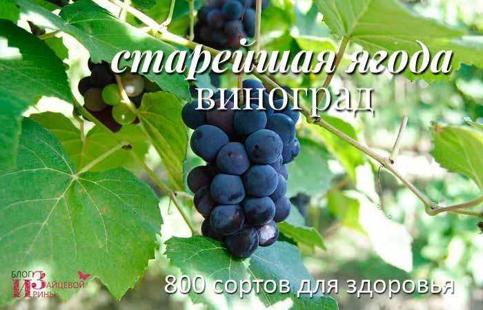 /vinograd-polza-i-vred.html