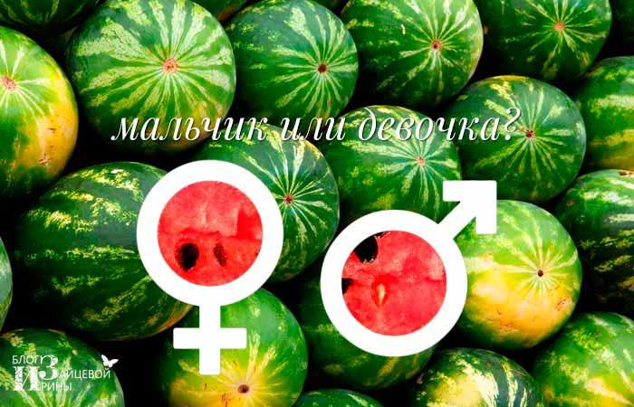 Как же выбрать арбуз «девочку»