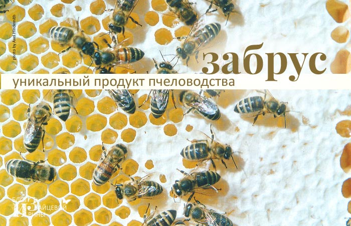 /zabrus-pchelinyj-unikalnyj-produkt.html