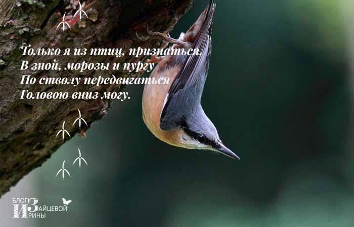 загадки про птиц с ответами