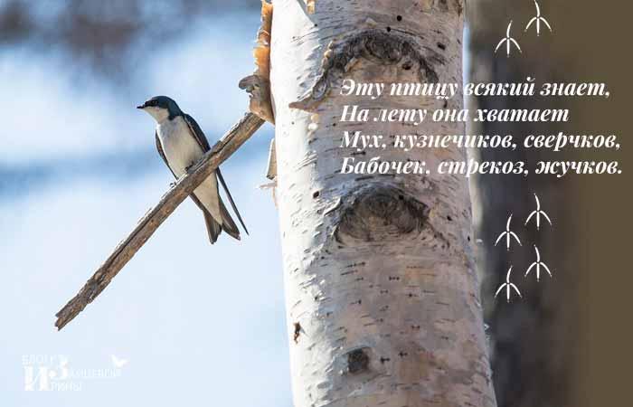 загадки о перелетных птицах