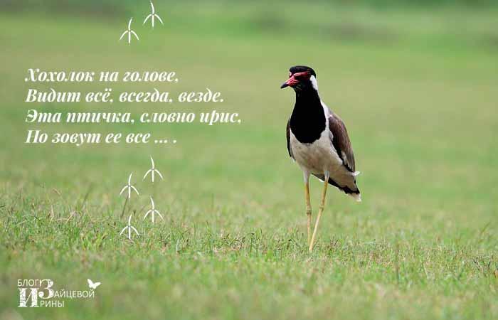 загадки о зимующих птицах
