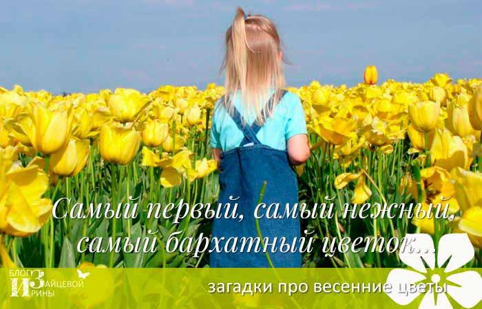 загадки о весенних цветах